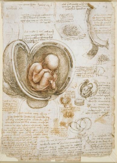 Representación del feto in utero, Leonardo da Vinci